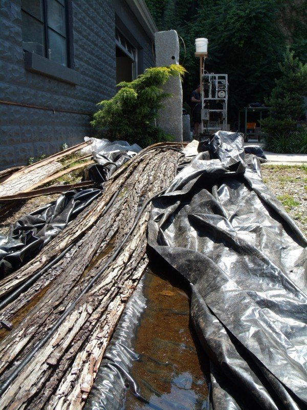 Tree length strips of bark soaking alongside the Boggs Collective Building